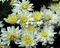 _DSC3905 (pnther60) Tags: backyard roanoke floraandfauna