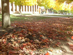 Leaves Carpet the Earth