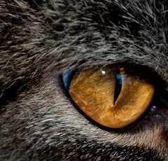 Mirada felina (hunter of moments) Tags: macro eye art luz nature animal cat ojo nikon feline gato felino mirada mascota d5000 flickraward