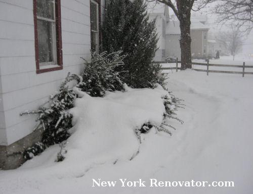 SnowyYews2