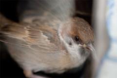 20090121_sparrow