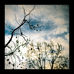 Day Twenty Two (Dustin Diaz) Tags: winter sky tree clouds season square 50mm nikon branch dof bokeh framed 365 nikkor thursday featured project365 50mmf14g dustindiazcom d700
