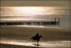 (Rob Millenaar) Tags: light horse sun beach landscape scenery zeeland 100v10f dishoek galop