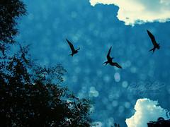 I believe I can fly... (Just Kimberlee) Tags: blue birds three bokeh scout explore monday blackbird onblue threelittlebirds explored bokehlicious abigfave anawesomeshot bokehland bokeholic