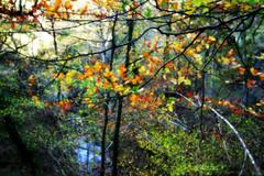 Ucieda (Danimj) Tags: trees españa colors leaves forest hojas spain arboles bosque cantabria ucieda