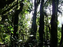 Gunung Irau #129 – Into The Jungle Again. (ighosts) Tags: travel bridge friends food mist rain dinner climb moss hiking hills adventure malaysia steamboat cameronhighlands pahang perak gunungirau tropicaljungle jungletreking mossyjungle