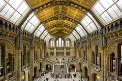 Natural History Museum (Stringendo) Tags: roof london glass museum hall wideangle arches naturalhistory southkensington sigma1020mm