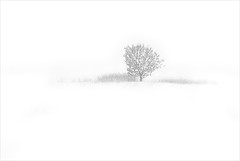 tree on white (H o g n e) Tags: winter bw white snow tree loss norway landscape blackwhite frost quiet january quietness vestfold norwegianwood norwegianforest winterforest pprowinner