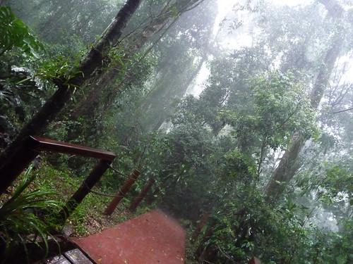 La selva dei guaranì