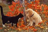 Perro y Gato Otoño