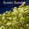 Scenic-Sunday-100-x-100