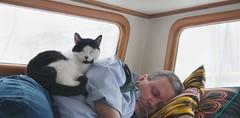 cat boat blackandwhitecat catrestingonhuman