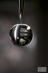 Water Ornament (adr!@n) Tags: three faved 52weeks flickrthemes week13pix