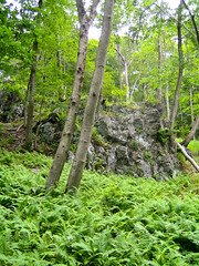 Rocks (Adam Zolyak) Tags: location trailshiking gunpowerfallsstateparkmd
