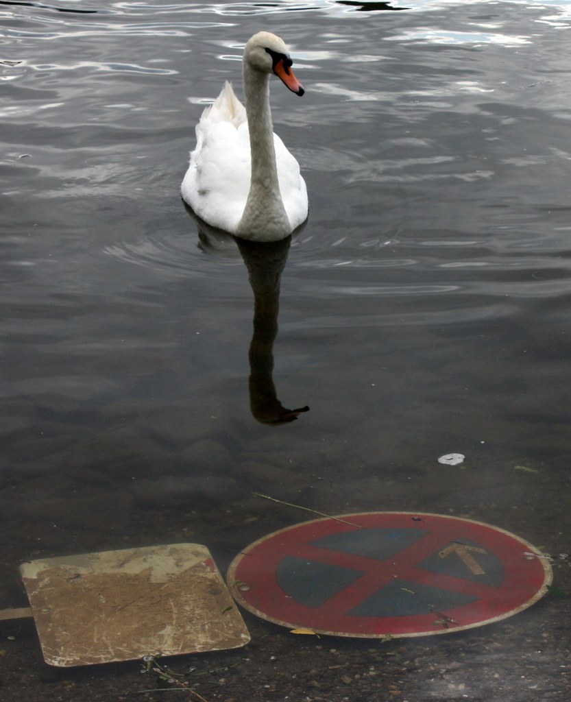 swan, parking prohibited