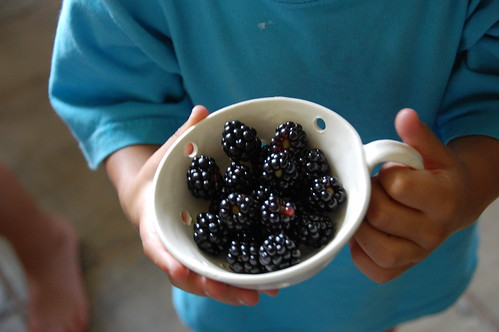 the last of the black berries