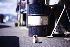17 (yugoroyd) Tags: cats cute cat kitten 猫 ねこ straycat ネコ 田代島 tashirojima tasirojima