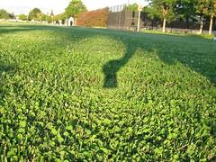 opposition effect in clover