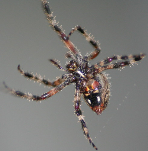 unknown spider2
