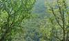 Signs of Fall, near Gjilan, Kosovo, September 13, 2009 (Ivan S. Abrams) Tags: autumn trees green fall nikon seasons kosova kosovo peja gjilan pristina ferizaj kosove ulpiana d700 onlythebestare ivansabrams trainplanepro nikon24120mmf3556gvr ivanabrams granchanitsa nikkor24120mmf35mmf3556gvr abramsandmcdanielinternationallawandeconomicdiplomacy ivansabramsarizonaattorney ivansabramsbauniversityofpittsburghjduniversityofpittsburghllmuniversityofarizonainternationallawyer