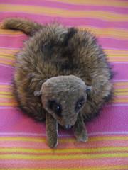 Meercat hat