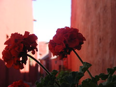 Monastero Santa Catilina, Arequipa (david.978) Tags: trip travel flower per