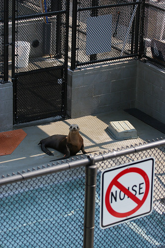 Sea lion agrees with noise policy