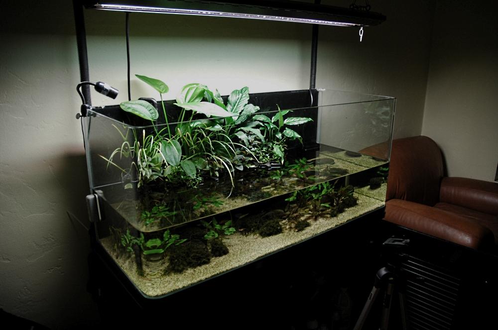 75 gal Riparium - Aquascaping - Aquatic Plant Central
