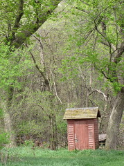 Old Outhouse in the Grove