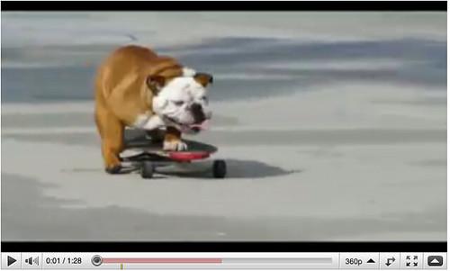 skateboard.dog.old.toolbar