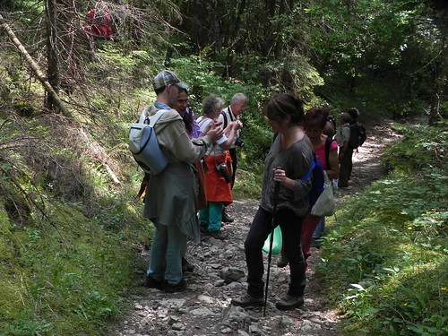 Le chemin en forêt - Planfait 021