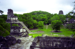 Tikal Tilt-Shift (jssutt) Tags: rainforest guatemala jungle tikal getty gettyimages peten faketiltshift jssutt jeffsuttlemyre