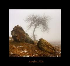 (tozofoto) Tags: winter light mist cold tree colors rock landscape frost hungary natur snag mtra zarafa topofthefog thesecretlifeoftrees tozofoto visipix superstarthebest lightiq
