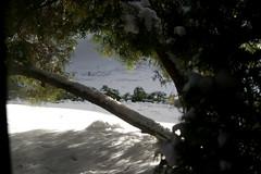 neve (Poe ♪) Tags: snow neve pacificnorthwest washingtonstate 雪 edmonds forchristmas снежок thisphotowastaken thesnowmeltedalongtimeago butiamstillpostingsnowphotos hassomeoneelsebeenusing cannotrememberwhere mycamerasachien shouldhaveboughtheracamera