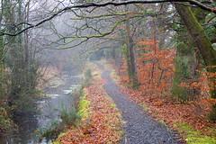 Riverside Walk (Dan Baillie) Tags: trees winter leaves path walk portfolio dumfriesandgalloway bladnoch puddock wigtownshire danbaillie bailliephotographycouk bailliephotography wigtownshirephotographer dumfriesandgallowayphotography