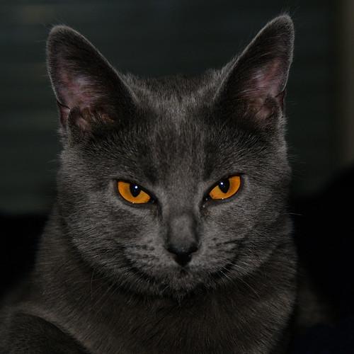 Devilish Douce