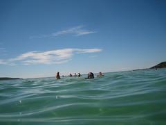 Swimming at Fingal Bay