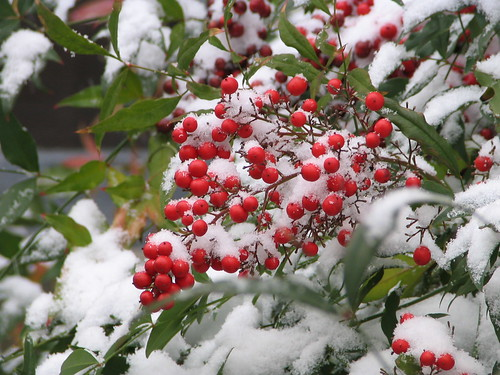 Berries 'n' Snow