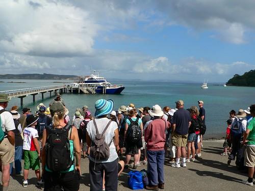 Tiritiri Matangi Island, Hauraki Gulf, New Zealand por Sandy Austin.