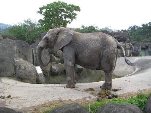 你拍攝的 8大象。