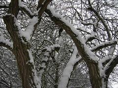 Delph Snow 8