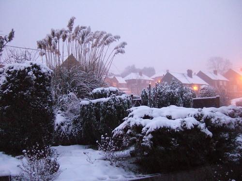 snow feb 5 2009 010