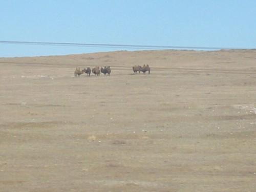 Bulten in de woestijn