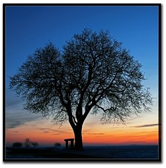 S U N S E T ( rednaxela_west) Tags: winter sunset sky bw orange tree ex silhouette fire sonnenuntergang hessen 5 natur himmel burn landschaft baum brennt schwarz hdr orang wetterau weis mnzenberg mnzenburg aplusphoto mindigtopponalwaysontop