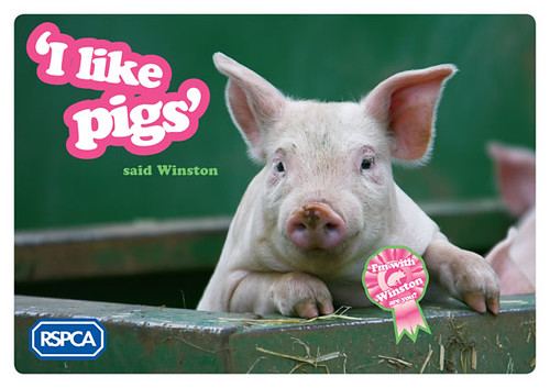 'I like pigs' direct mail appeal from RSPCA (February 2009)