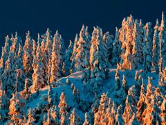 mt seymour (petetaylor) Tags: blue trees sunset orange white mountain black yellow vancouver nikon purple mtseymour polarizer d300