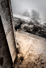 looking down from walhalla, © Monika Andrae