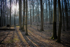 [flore#01] Sun shines and wakes the forest up (PtitBen) Tags: trees leaves sunshine forest soleil spring ray arbres rayon printemps fort feuilles fortdesoignes