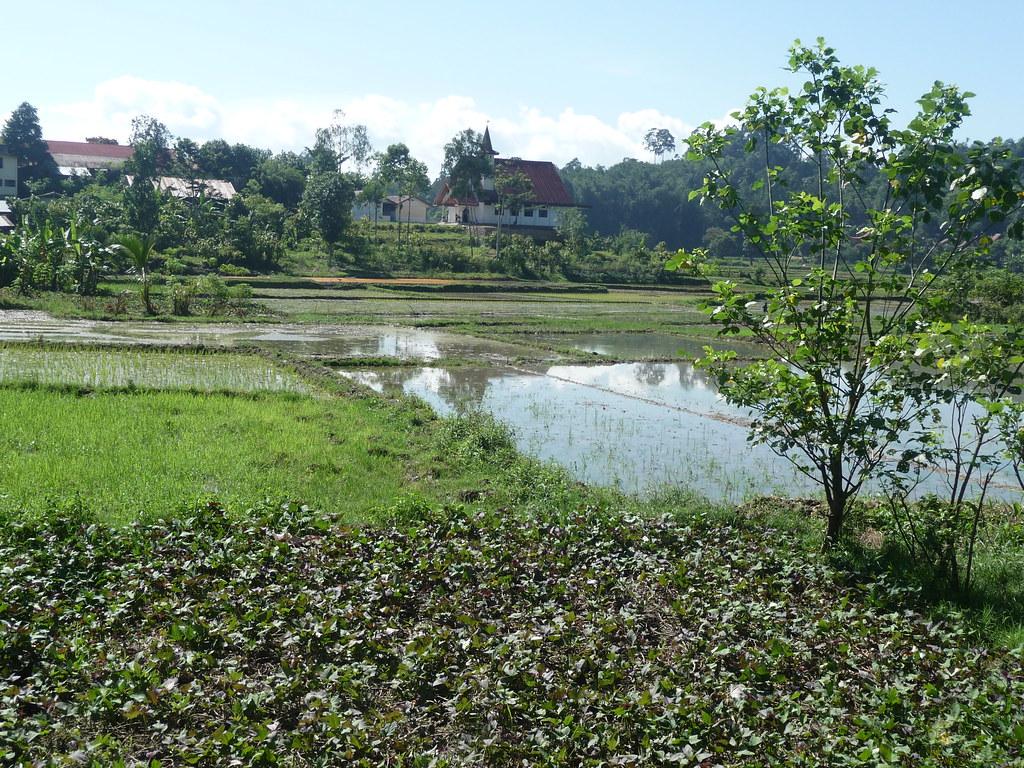 Pays Toraja Visite 3 (9)
