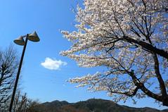 津久井湖城山公園花の苑地